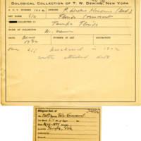 Thomas Wilmer Dewing, egg card # 076