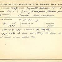 Thomas Wilmer Dewing, egg card # 283