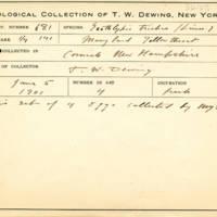 Thomas Wilmer Dewing, egg card # 785u