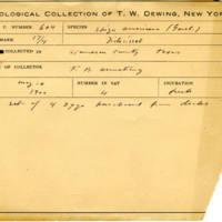 Thomas Wilmer Dewing, egg card # 488