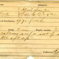 Lewis L Knox, egg card # llk003u