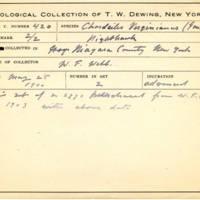 Thomas Wilmer Dewing, egg card # 315