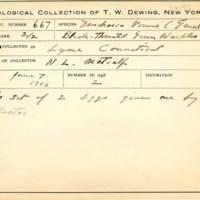 Thomas Wilmer Dewing, egg card # 780u