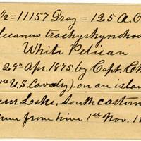 Clinton Mellen Jones, egg card # 162