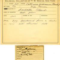 Thomas Wilmer Dewing, egg card # 202