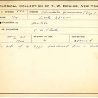 Thomas Wilmer Dewing, egg card # 438