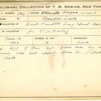 Thomas Wilmer Dewing, egg card # 405