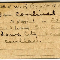 William F. Coultas, egg card # 013