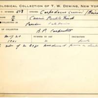 Thomas Wilmer Dewing, egg card # 422