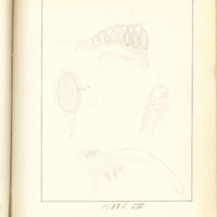 A brief description of nine species of Hepaticae found in the vicinity of Iowa City by Mary F. Linder, 1886, Page 84