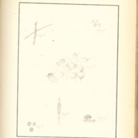 The Slime Moulds of Eastern Iowa by Minna Pryce Humphreys, 1891, Page 182