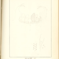 A brief description of nine species of Hepaticae found in the vicinity of Iowa City by Mary F. Linder, 1886, Page 80