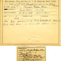 Thomas Wilmer Dewing, egg card # 182