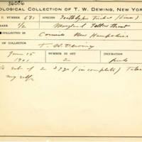 Thomas Wilmer Dewing, egg card # 772u