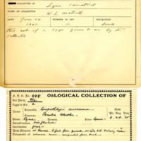 Thomas Wilmer Dewing, egg card # 775u