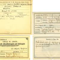 Thomas Wilmer Dewing, egg card # 427
