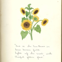 The Sun Flower as a Type of Flowering Plants by Anne B. Jewett, 1890, Page 3