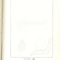 A brief description of nine species of Hepaticae found in the vicinity of Iowa City by Mary F. Linder, 1886, Page 90