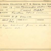 Thomas Wilmer Dewing, egg card # 628u