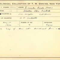 Thomas Wilmer Dewing, egg card # 486
