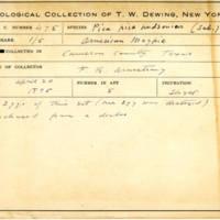 Thomas Wilmer Dewing, egg card # 377