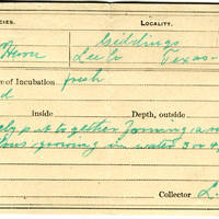 Lewis L Knox, egg card # llk002u