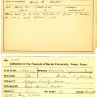 Thomas Wilmer Dewing, egg card # 317