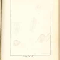 A brief description of nine species of Hepaticae found in the vicinity of Iowa City by Mary F. Linder, 1886, Page 72