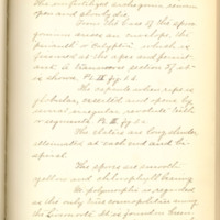 A brief description of nine species of Hepaticae found in the vicinity of Iowa City by Mary F. Linder, 1886, Page 38