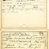 Thomas Wilmer Dewing, egg card # 690u