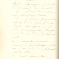 The fertilizing cell, its varying form and behavior by Nelly Peery, 1890, Page 89