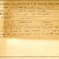 Thomas Wilmer Dewing, egg card # 514