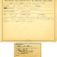 Thomas Wilmer Dewing, egg card # 383