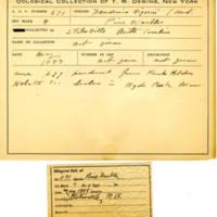 Thomas Wilmer Dewing, egg card # 536