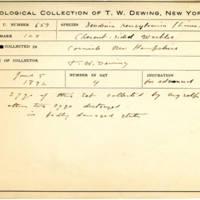 Thomas Wilmer Dewing, egg card # 531
