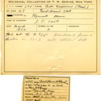 Thomas Wilmer Dewing, egg card # 256
