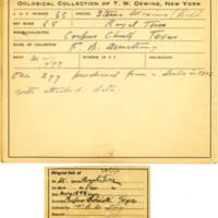 Thomas Wilmer Dewing, egg card # 052