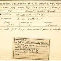 Thomas Wilmer Dewing, egg card # 833u