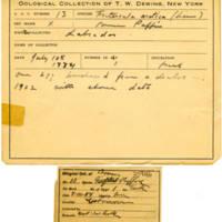 Thomas Wilmer Dewing, egg card # 013