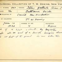 Thomas Wilmer Dewing, egg card # 685u