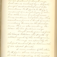 A brief description of nine species of Hepaticae found in the vicinity of Iowa City by Mary F. Linder, 1886, Page 33