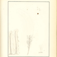 The Slime Moulds of Eastern Iowa by Minna Pryce Humphreys, 1891, Page 200